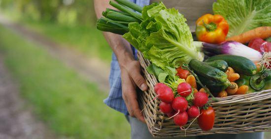 פירות וירקות מהמשק